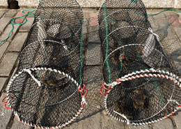 Best Crap Fishing Traps and Pots