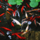 Best Auto Fish Feeders For Ponds