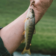 Best Trout Fishing Lures